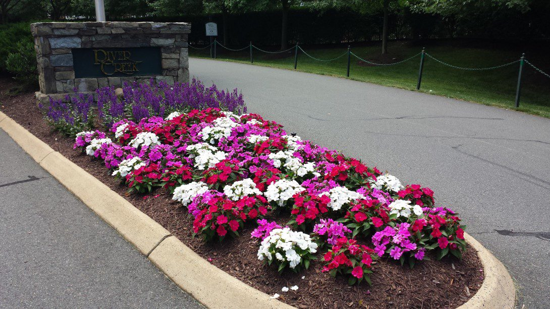 Time for summer flowers almost blake landscapes plant the summer flowers sunpatiens mightylinksfo