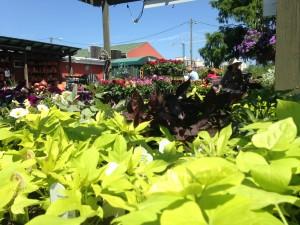 July lawn and landscape tips blake landscapes - Merrifield garden center fairfax va ...