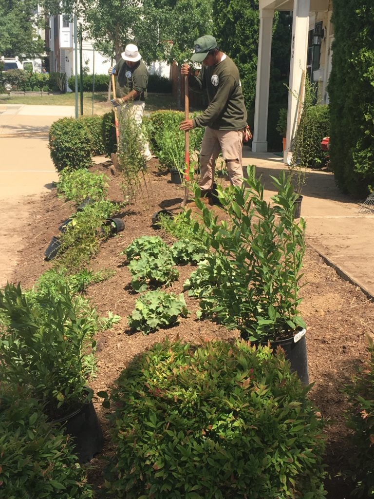 Blake Landscapes staff in June, installing native plants at the Sycamore Hill community center.