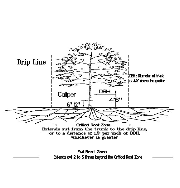 Critical root zone - North Carolina Urban Forest Council