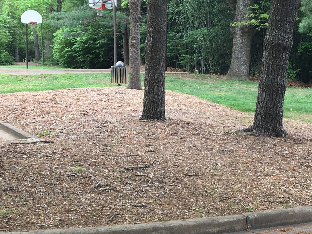 Trees mulched with wood chips at the Reston Association's Newbridge Recreation Area