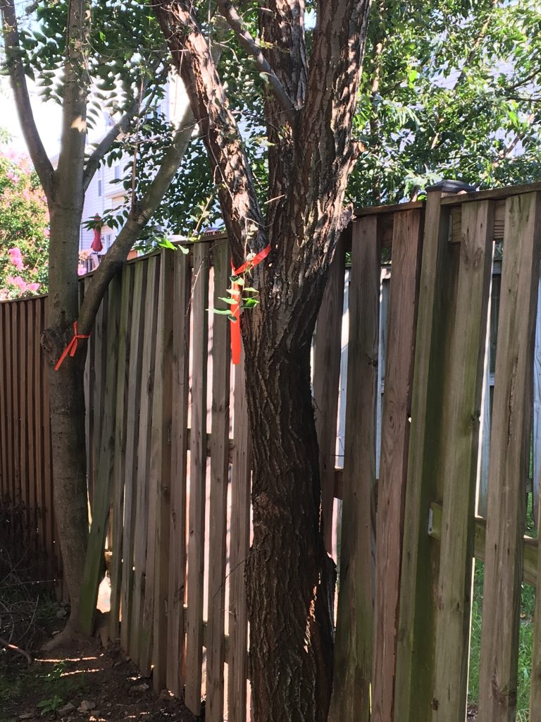 It's too late for this Leesburg homeowner, who will have to have the trees removed and will likely have to replace at least part of the fence.